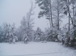 Snowfall of 2011-my treeline...