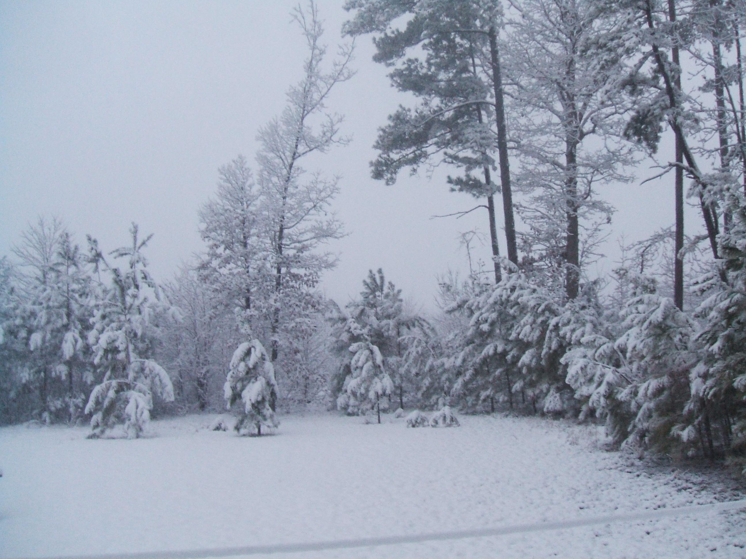 Carolina Christmas Trees