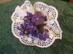 violets-3